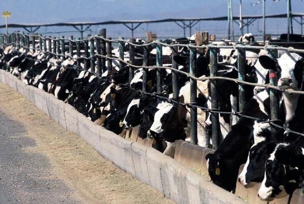 Many Kansas cattle breeders sell cattle online.