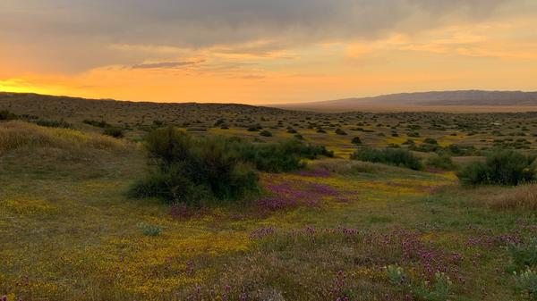 Sunset over the Carrizo Plain National Monument north of Los Angeles. The super bloom of wildflowers is fading to brown.