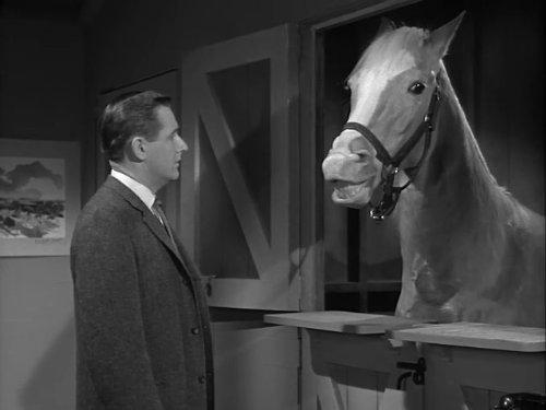 "Still from the TV show ""Mister Ed,"" which originally aired in the 1960s."