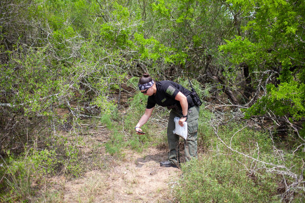Sheriff's Deputy Bianca Mora recovers remains found by the Border Patrol on a private ranch in Brooks County, Texas. This is the ninth set of human remains the county's sheriff's office has recovered this year.