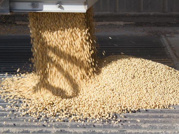 Farmers have produced record or near-record soybean crops in recent years.