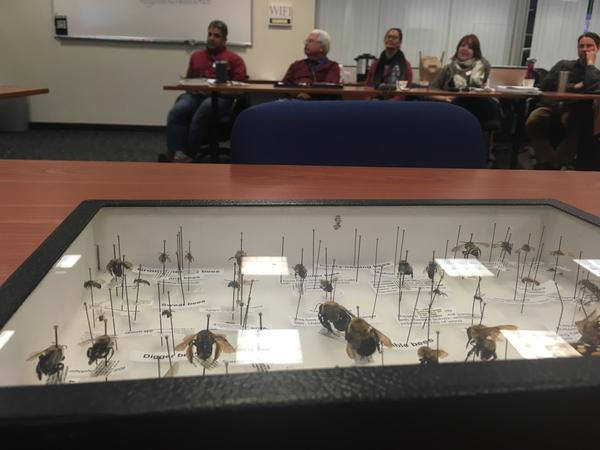 A tray of insect specimens makes its way among participants in a workshop about pollinators at Colorado Department of Transportation offices in Golden, Colorado, in May.