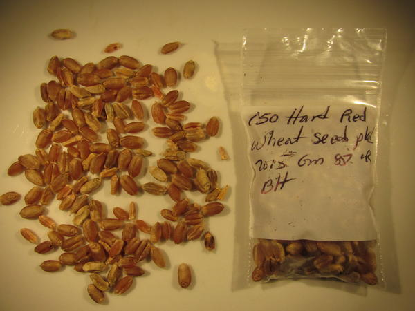 Heirloom wheat seeds. These seeds were harvested in Hawaii, but Wes Perryman is trying to do the same thing at his farm in Central Texas, with the help of an Austin-based whiskey distillery.