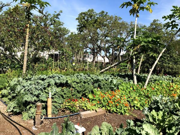 It's easy being green at the St. Petersburg EcoVillage.