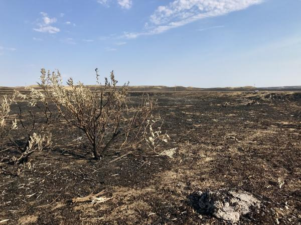 The massive Lodgepole complex of fires burned an area the size of New York City in July 2017. They were spurred by a 'flash drought.'