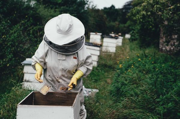Heroes to Hives is a program that trains veterans in beekeeping