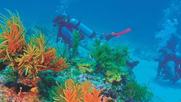 Divers check out the sea life while cruising Alligator Reef during a recent diving excursion.