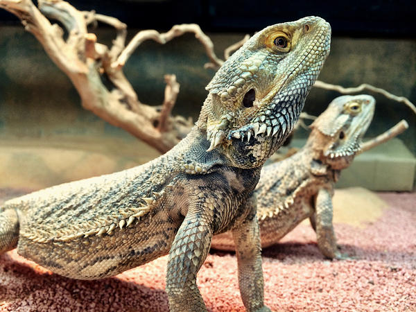Repticon staff wants people to think carefully before choosing one of the creatures as their pet.