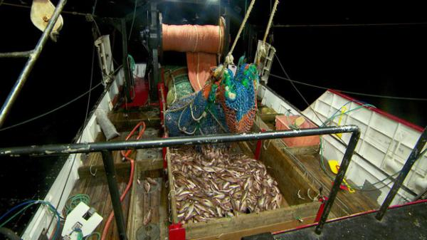 <p>Fishing trawlers like the Winona J are able to catch more rockfish as populations rebound.</p>