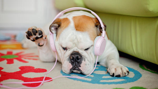 Cute pups need playlists, too.