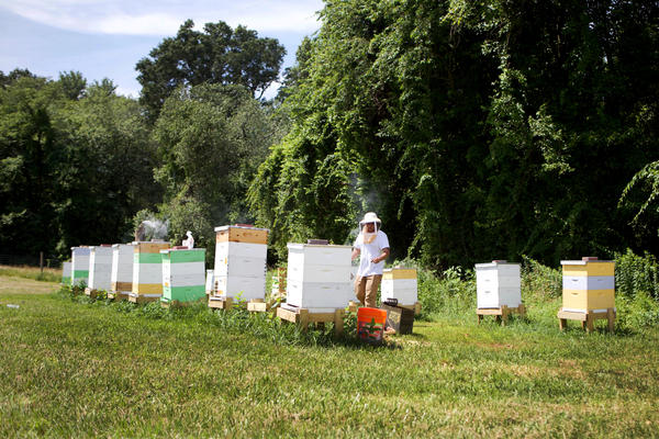 Honeybee hives stand on a field at the Central Maryland Research and Education Center in Beltsville, Maryland. An annual survey of U.S. beekeepers shows the rate of colony death last winter — nearly 40% — was the highest reported since the survey began 13 years ago.
