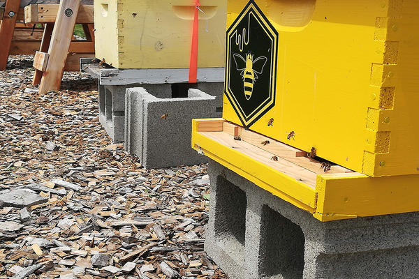 Honey bees fly in and out of one of the hives at MSU's Honey Bee Research Site and Pollinator Garden, June 19, 2019.