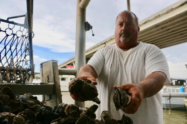 Oyster harvester Mitch Jurisich holds two dead oysters on a boat near Empire, Louisiana. Jurisich says weeks of freshwater from the flooding Mississippi River have killed many of the oysters on his leases this year.