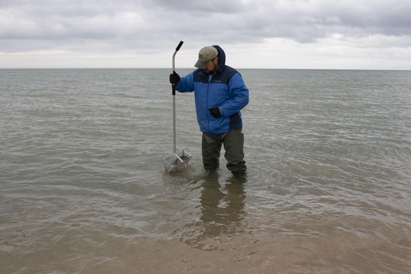 A wildlife technician pulls up cobble up from Lake Michigan.