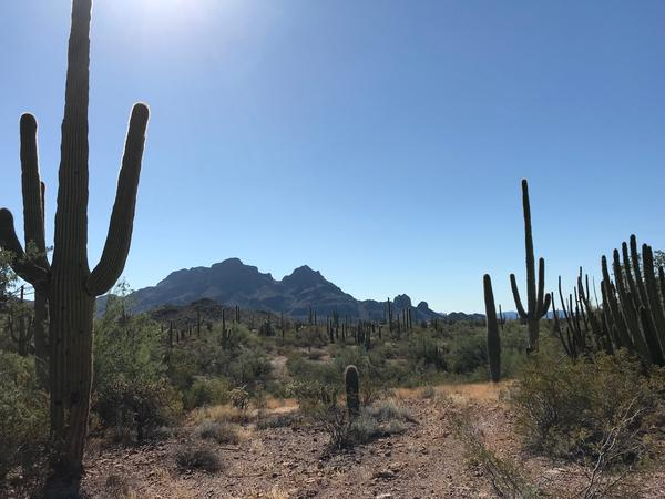 Desert near Ajo, Arizona