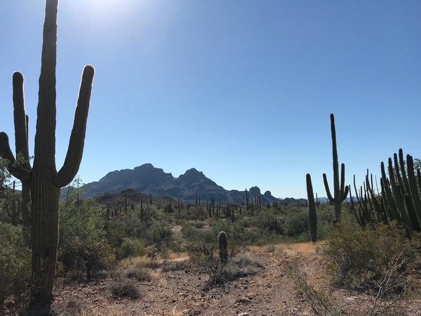 Desert near Ajo, Arizona