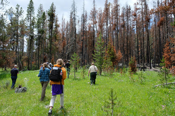 Ecologists, fire managers and journalists visit a burn site one year after lightning started the Bacon Rind Fire, July 10, 2019.