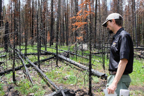 Fire Ecologist Todd Erdody with the Custer Gallatin National Forest describes how fire is part of the forest's natural cycle, June 10, 2019.