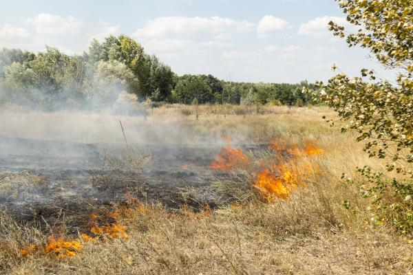 Grass fire. Stock photo.