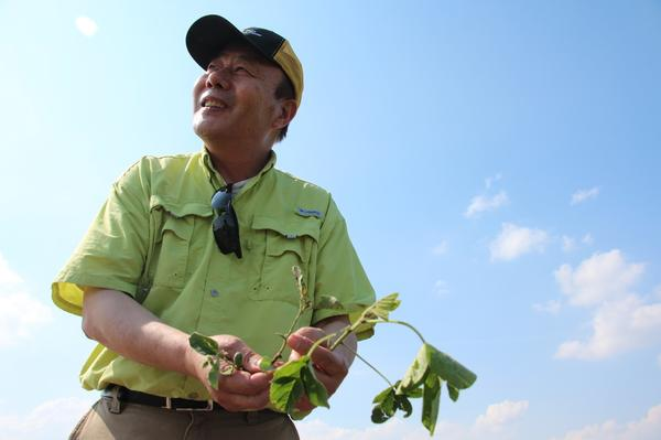 Pengyin Chen, professor of soybean breeding and genetics at the University of Missouri, in his test plots of soybeans near the town of Portageville.