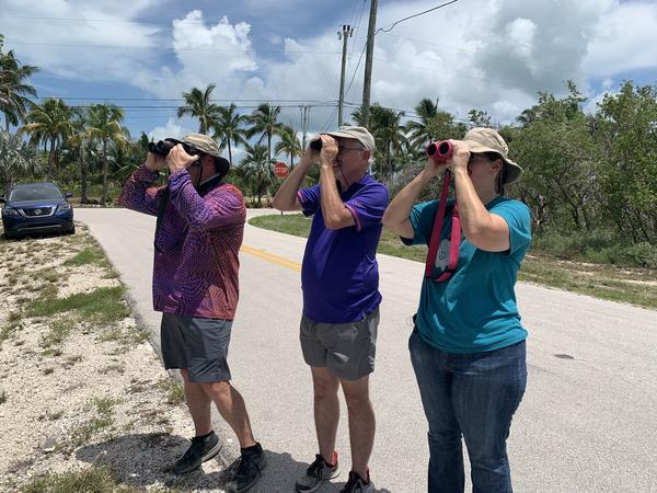 From left, Don Fraser, Bill Pranti and Valeri Ponzo all traveled from the Gulf Coast Friday to see the Antillean Palm-Swift in the Keys.