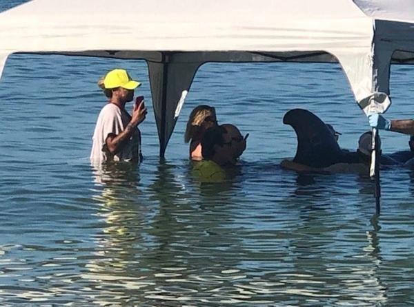 A group of five beached whales appeared on Redington Beach this morning.