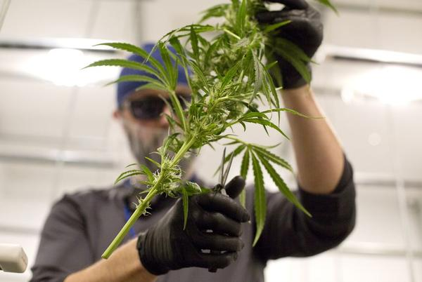 The Texas Department of Public Safety told state budget officials the hemp bill would come with a hefty price tag for additional drug testing in marijuana cases.