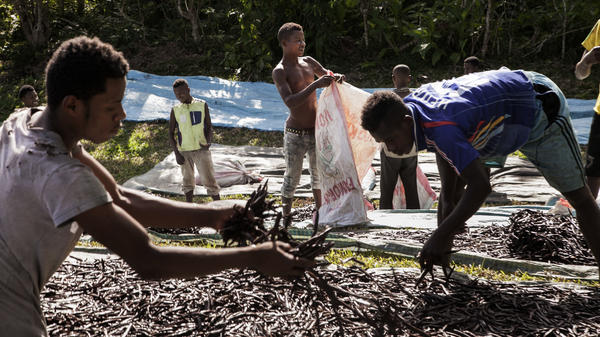 """Workers spread """"red vanilla"""" (vanilla that has been treated by special cooking) in the sun to be dried near Sambava, Madagascar, in May 2016. Madagascar, producer of 80 percent of the world's vanilla, has seen huge jumps in the price. It's one of the most labor-intensive foods on Earth."""