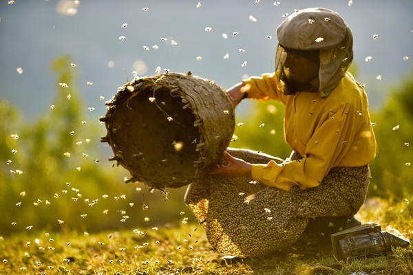 Beekeeper Hatidze Muratova lives in a ruggedly mountainous area of Macedonia. She has a simple rule: When you harvest honey, you only take half — and leave the other half for the bees.