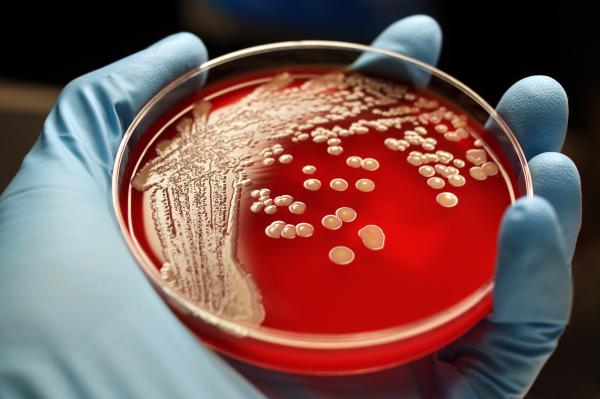 Scientists are exploring new drugs that can fight antibiotic-resistant bacteria such as MRSA.