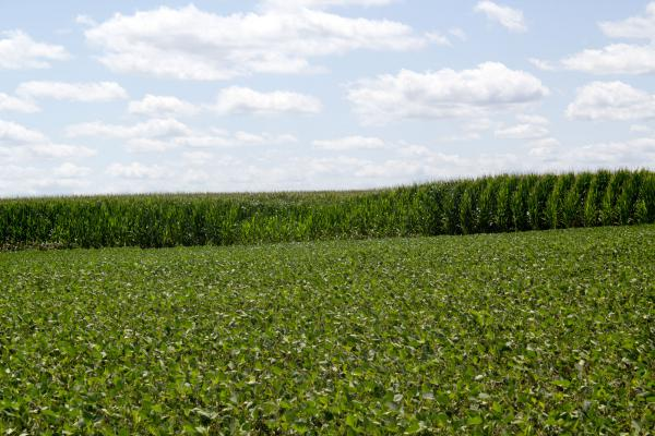Iowa farmers planted more acres of corn and soybeans than the U.S. Department of Agriculture expected.