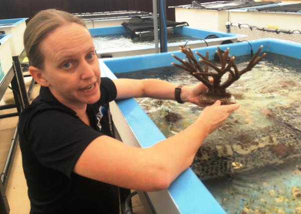 Keri O'Neil checks out staghorn coral in the greenhouse