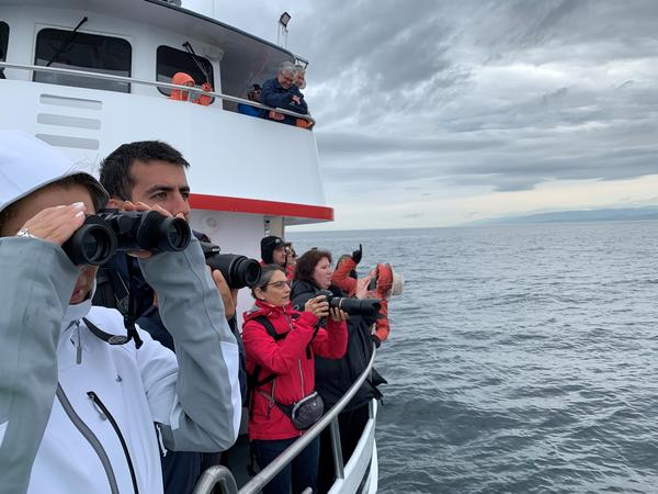 Whale watch tour guests crowd the rail of the Island Explorer 4 to witness the so-called humpback comeback.