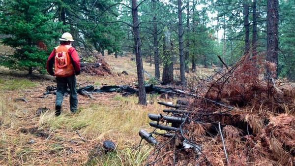 <p>Reese Lolley walks through a part of the forest that The Nature Conservancy has already thinned. Gaps in the forest create barriers to crown fires. The group will likely burn some of the slash piles next summer.</p>