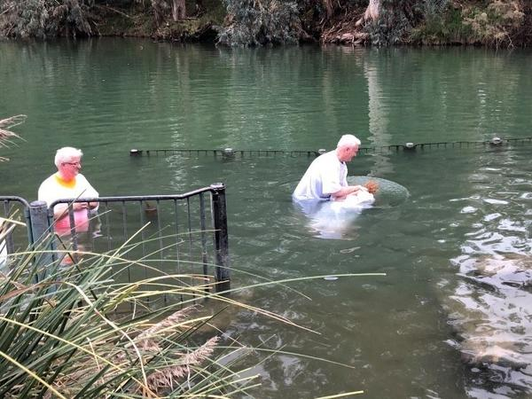 Sharon Litton of Shreveport, La., is baptized by immersion in the Jordan River, where Jesus is said to have been baptized. Such baptisms are a staple of evangelical tours of Israel.