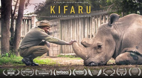 'Kifaru' documents the connection between the last male white rhino and his two caretakers.