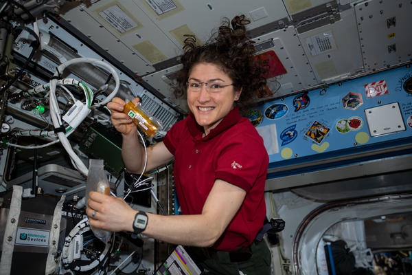 Expedition Flight Engineer Christina Koch conducts research operations for a protein crystal growth experiment on the International Space Station.