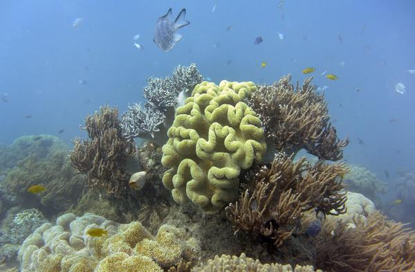 "The Australian federal government has downgraded its long-term outlook of the Great Barrier Reef to ""very poor,"" and it says that climate change is the most significant threat."
