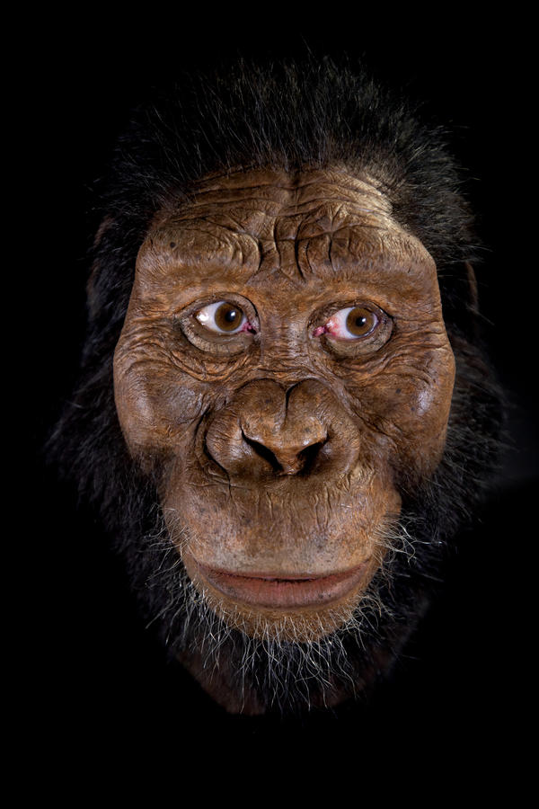 A face from the past appears following facial reconstruction of a 3.8 million year old skull found in Ethiopia.