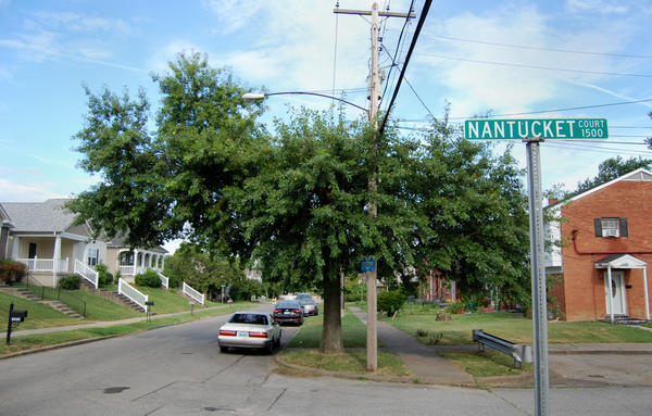 A tree grows beneath a power line in the Park DuValle neighborhood of Louisville, Ky. Urban environments can be especially harsh on trees.