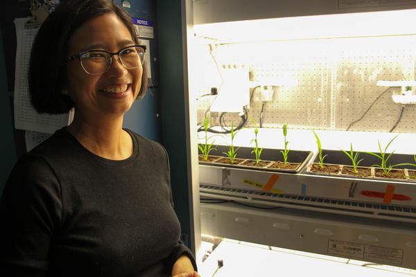 Researchers at Washington University and the Donald Danforth Plant Science Center, including Malia Gehan, are observing the growth of plants exposed to high levels of carbon dioxide for a four-year study.