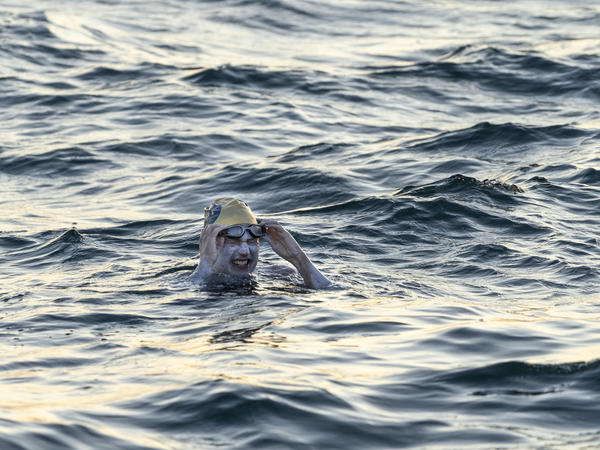 Sarah Thomas, a 37-year-old cancer survivor, swims across the 21-mile English Channel. She said she was stung on the face by a jellyfish during her epic swim, in which she crisscrossed the channel four times, a journey that ended up being more than 130 miles because of the tides.