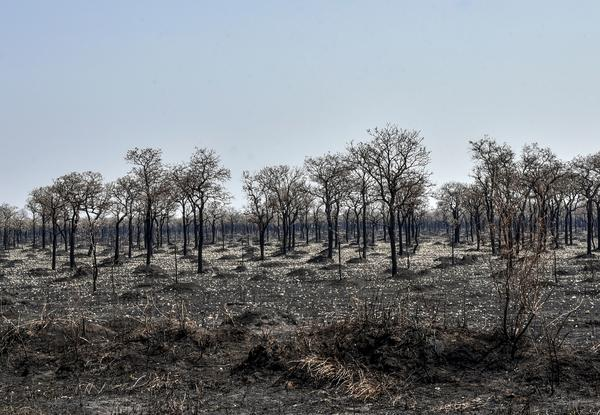 An area affected by forest fires in Otuquis National Park, in the Pantanal ecological region of Bolivia, southeast of the Amazon basin.