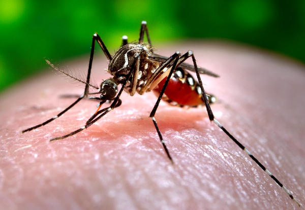 Seven people in Michigan have contracted the mosquito-borne virus Eastern Equine Encephalitis, and three have died.