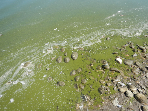 An algae bloom sullies the Eden Reservoir in Sweetwater County, Wyoming.