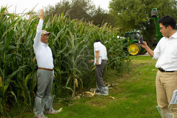 Grain buyers from Japan check out the corn on Rod Pierce's farm near Woodward, Iowa. From left: Tsuyoshi Mitarai, Atsunobu Naito and Takayuki Nakamitsu.