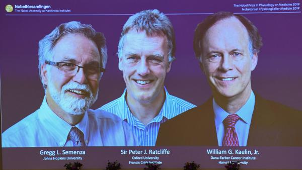 The winners of the 2019 Nobel Prize in physiology or medicine are Gregg Semenza of the U.S., Peter Ratcliffe of Britain and William Kaelin of the U.S. They're seen here on a screen during a news conference at the Karolinska Institute in Stockholm.