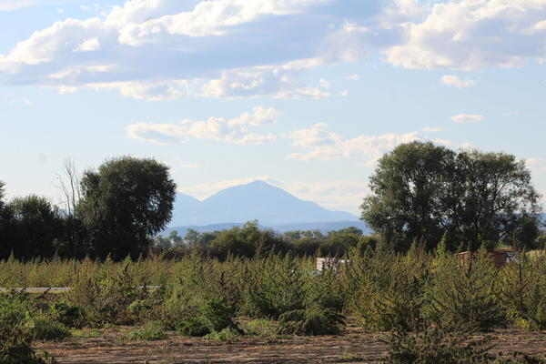 The view of the Spanish Peaks from the Hoehne Hemp Farm in Las Animas County before the cold weather hit.
