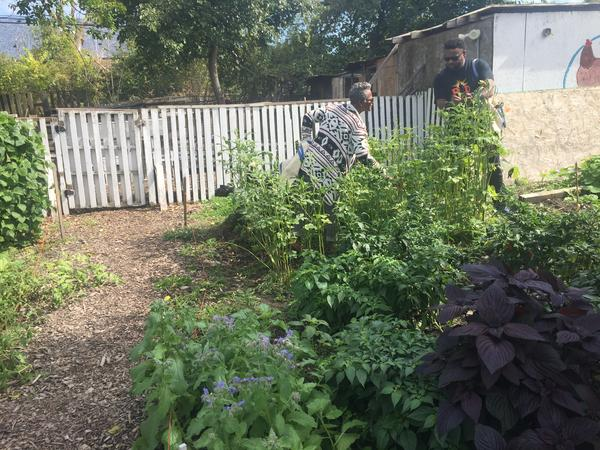 Vegetables and fruits in the garden give neighbors access to healthy, affordable food.