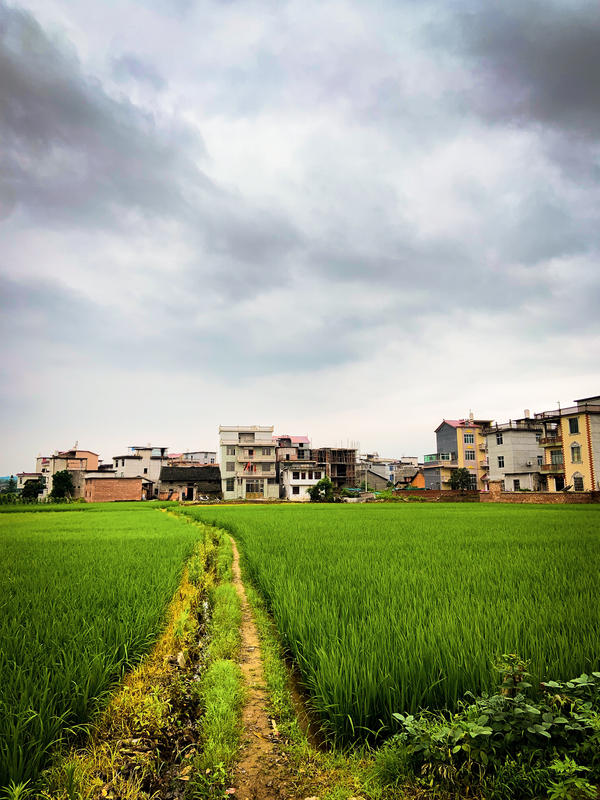 BEST LANDSCAPE (TIE) - This photo is a depiction of a tiny rice farming village named Zhoutou, which is located in the Chinese providence of Jiangxi. It is the village in which my father was born 52 years ago.